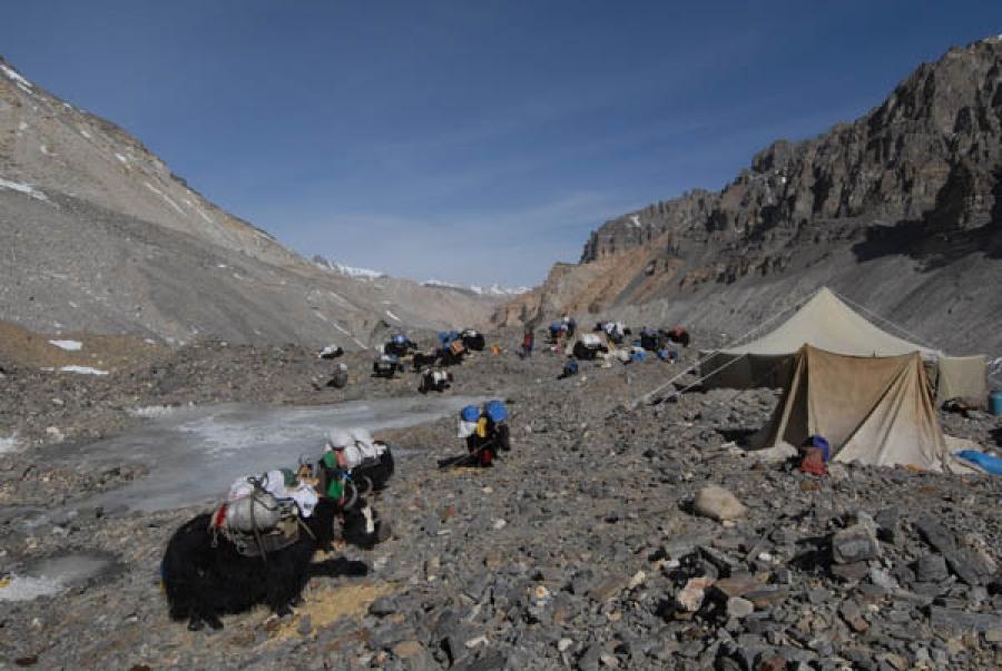 Jakokser på vei fra basecamp til ABC på nordsiden av Everest